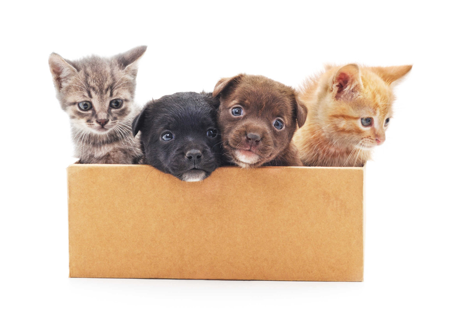 Kittens and a puppies in a box.